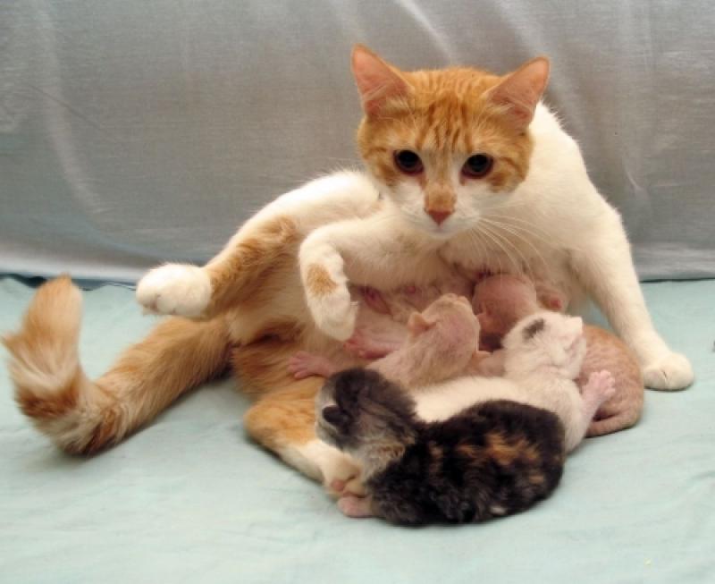 Картинки по запросу кесарево сечение у животного